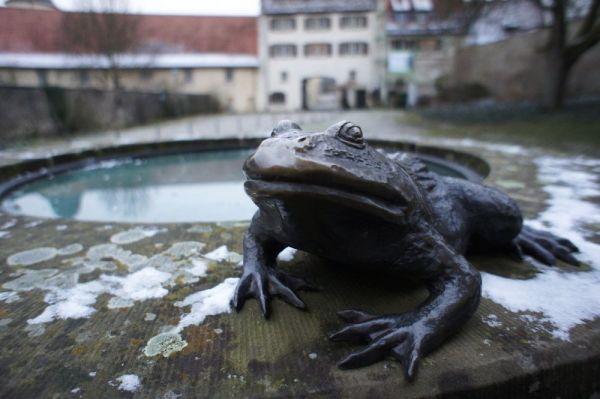 Kloster Schöntal - Frosch (c)moinservus