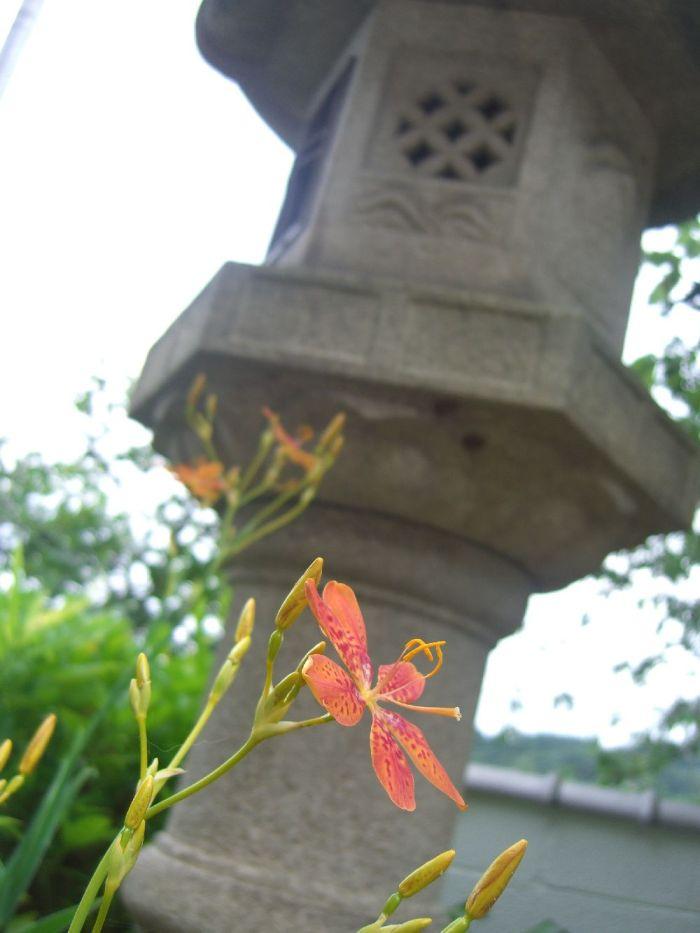 Blume (c)moinservus!