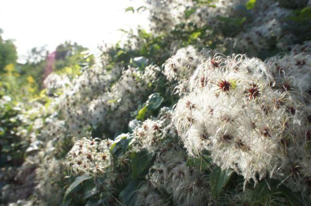 Herbst_0113 (c)moinservus!