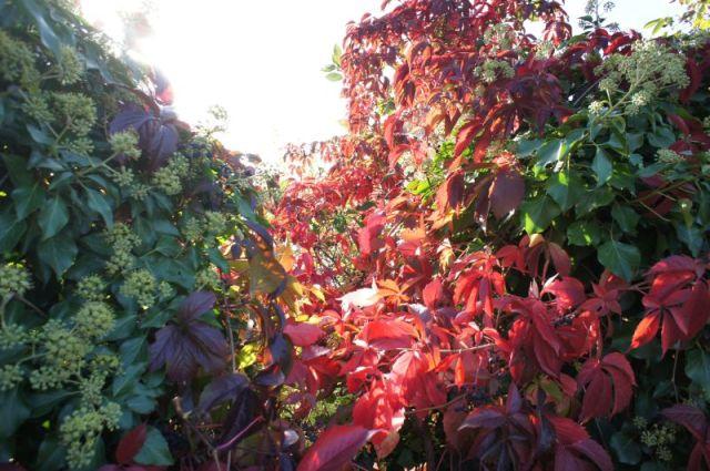Herbst_0213 (c)moinservus!