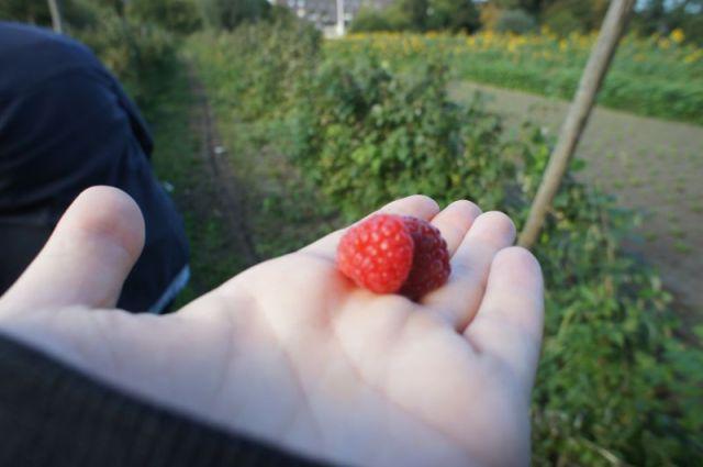 Herbst_0313 (c)moinservus!