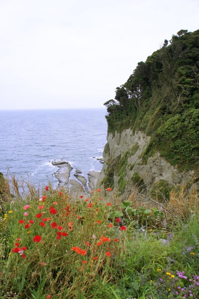 20150602_Enoshima 07