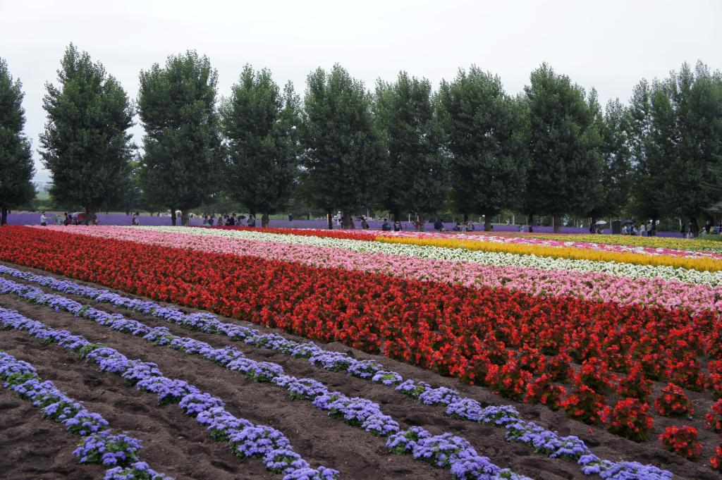 20150721_Tomita Farm 10