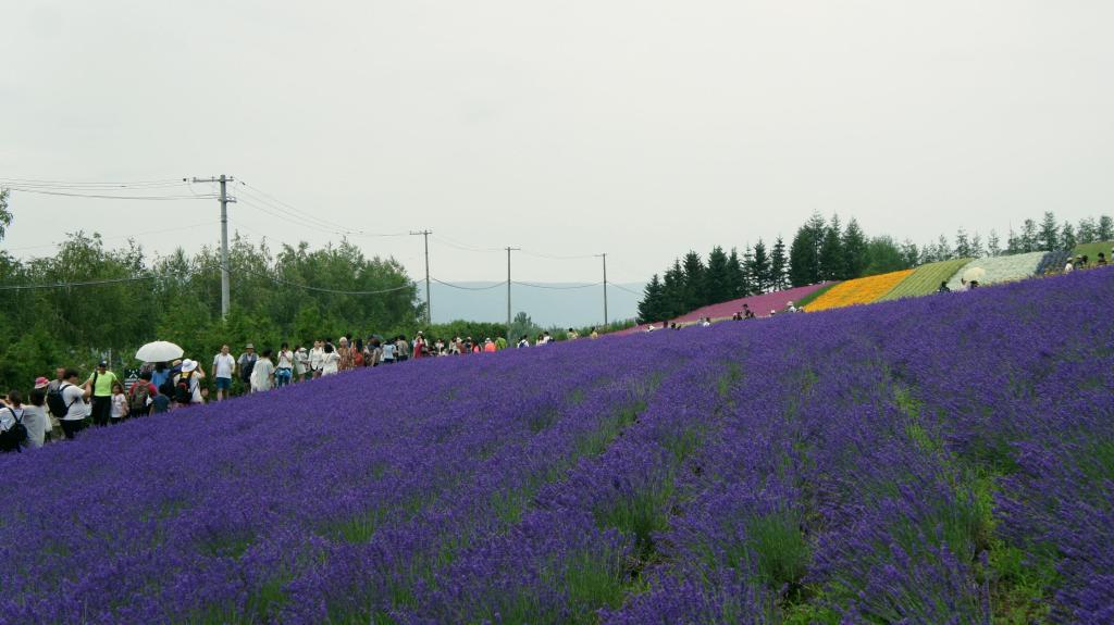 20150721_Tomita Farm 14